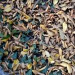 autunno_01