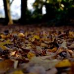 autunno_02