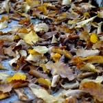 autunno_05