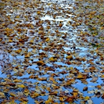 autunno_06