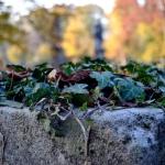 autunno_09