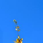 autunno_12
