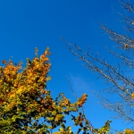 autunno_14