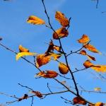 autunno_15