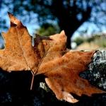 autunno_17