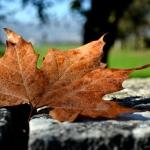 autunno_18