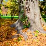autunno_19