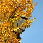autunno_22