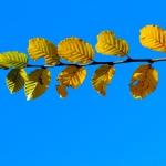 autunno_23